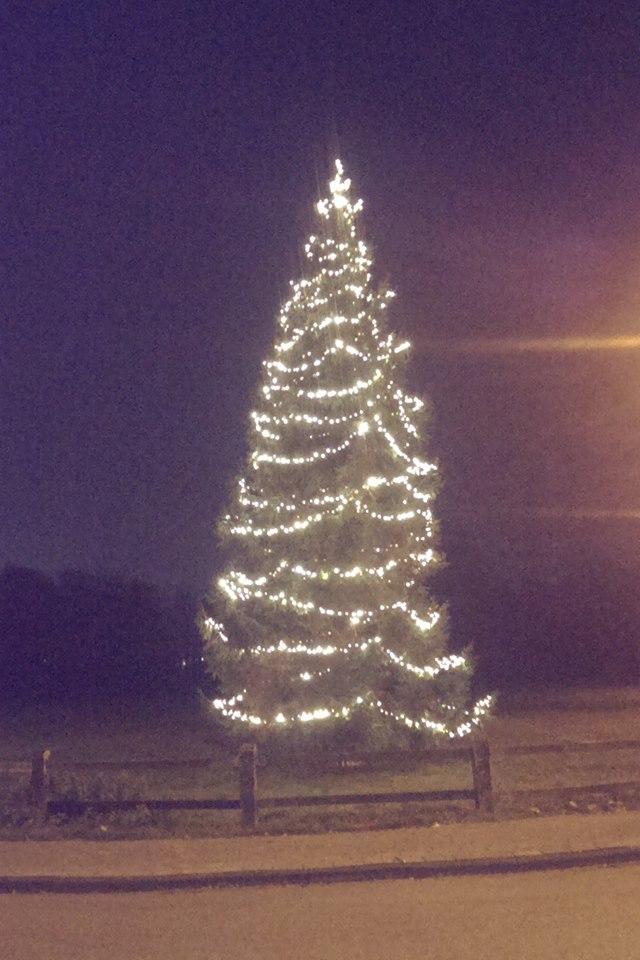 Deldense kerstboom versierd met 3000 lampjes