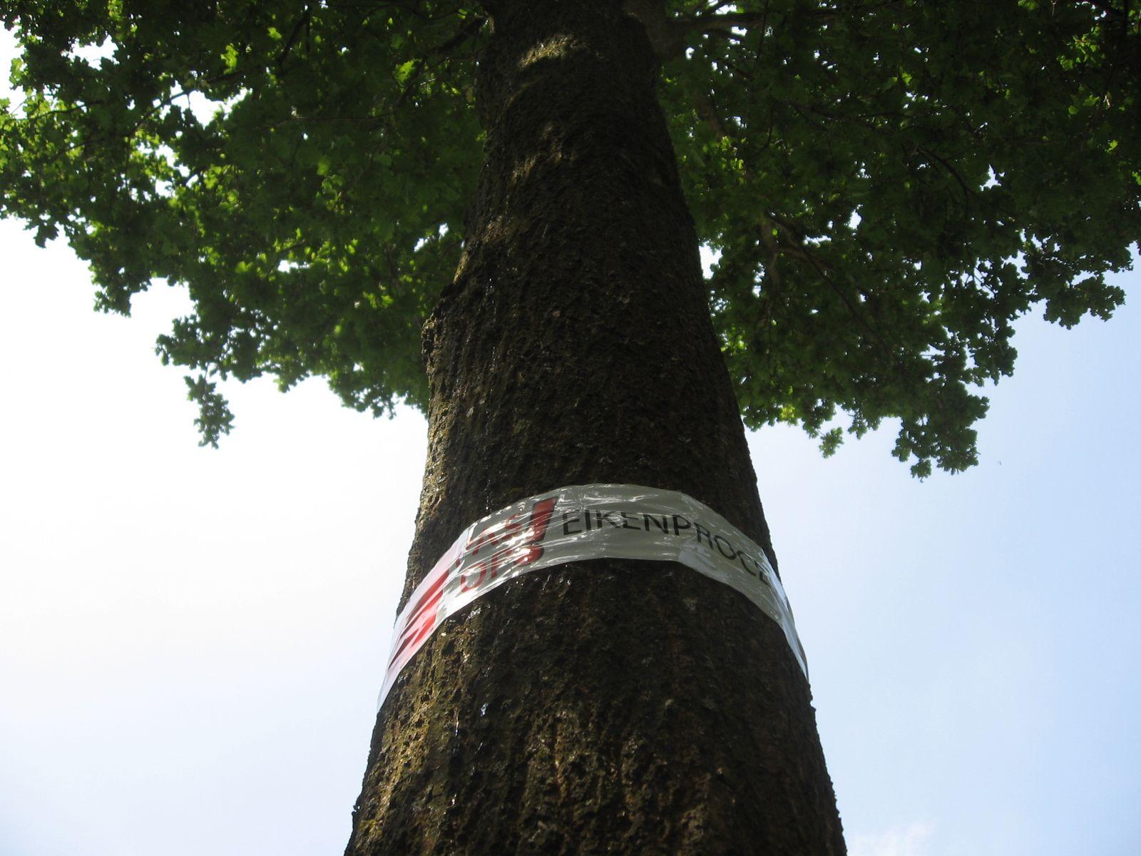 Geen andere bomensoorten in Deldense nieuwbouwwijk Braak West