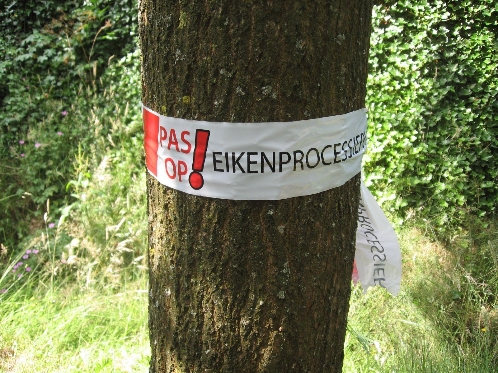 Hof van Twente bestrijdt eikenprocessierups vroeg én natuurvriendelijk