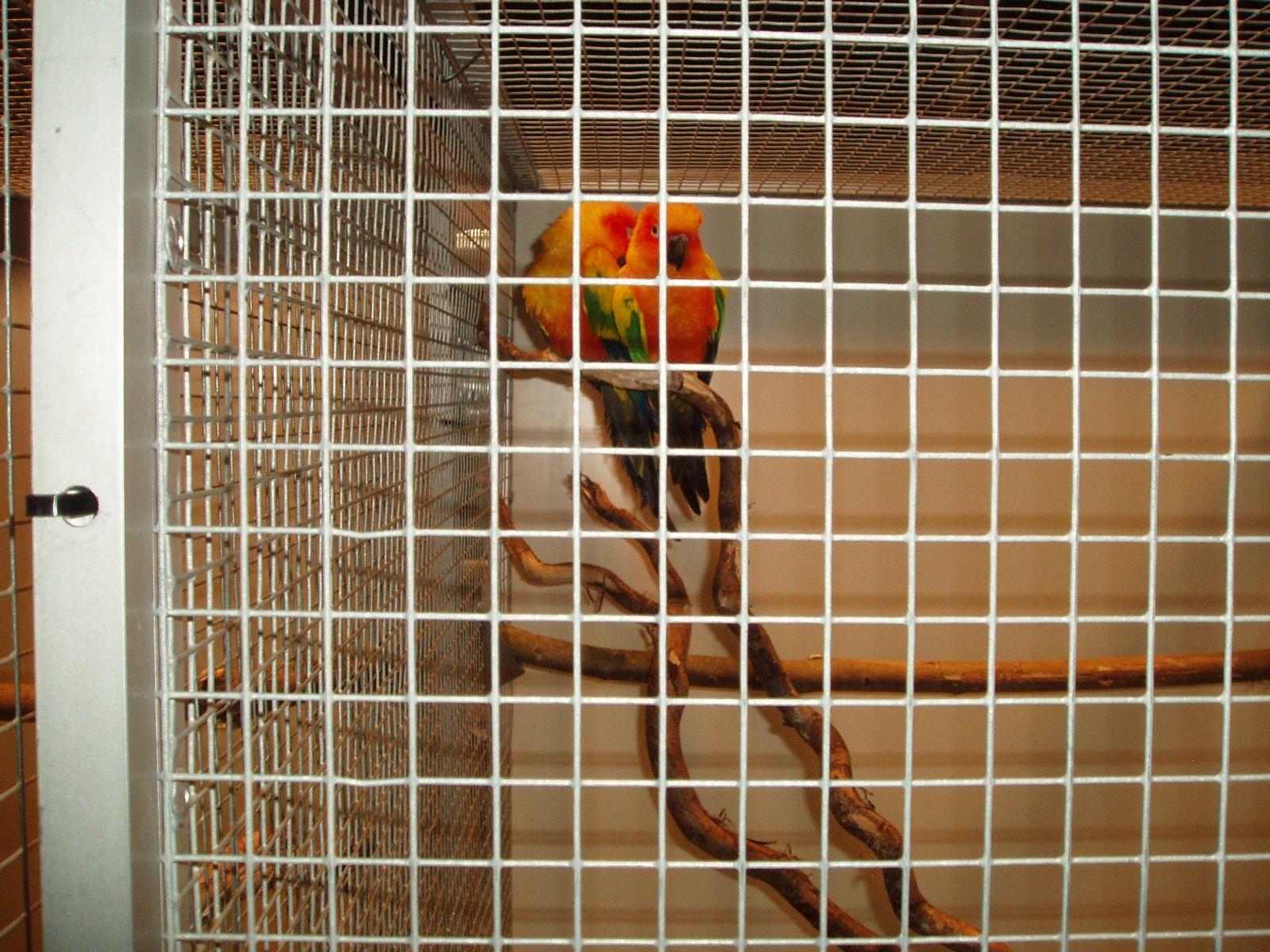 Grote variatie bij vogeltentoonstelling Delden