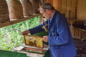 Themaweek 'Alles over Bijen' bij de Wendezoele