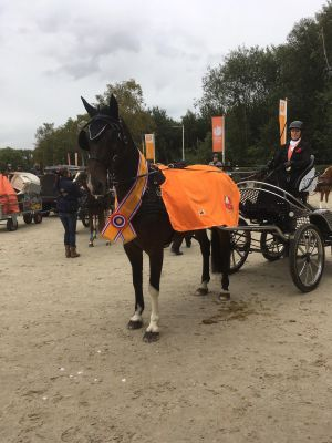Ambt Deldense Anne Marie Evers pakt NK titel met paard Dif