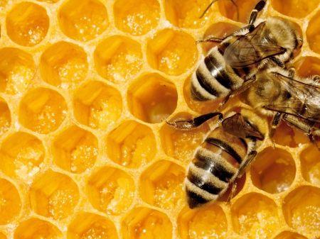 Bijenstal Moestuin Twickel geopend op Landelijke Open Imkerijdag